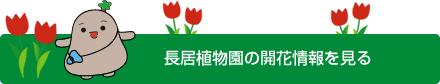 長居植物園の開花情報を見る