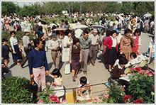 昭和55年4月 ボタン園