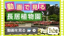 動画で見る長居植物園