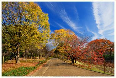 長居植物園の紅葉