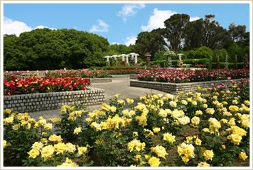 長居植物園バラ園
