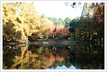 紅葉(小池)