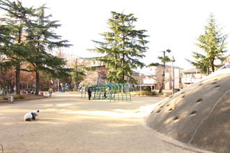 Northeast child open space