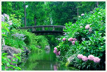 アジサイ園にかかる橋