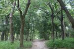照葉樹林・二次林