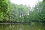第三紀植物群