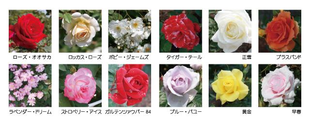 バラ園品種一覧