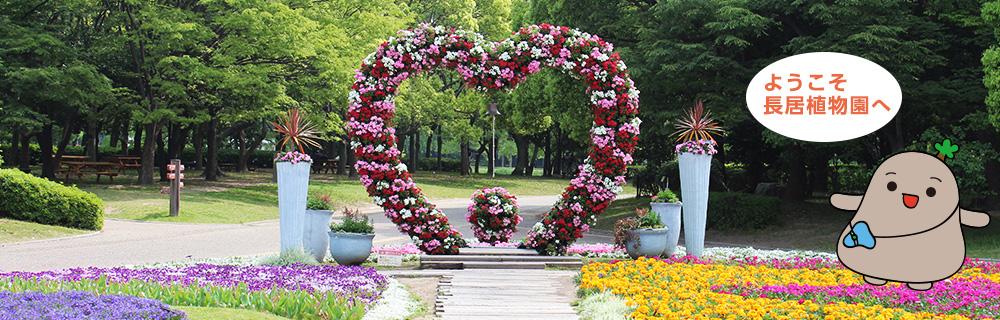Flower bed of heart