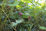 Waste (myriad green leaves plant)